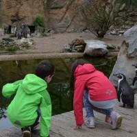 NaturZoo Rheine pinguins