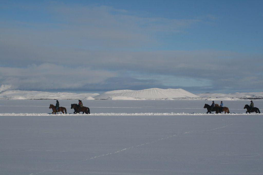 paardrijden ijsland